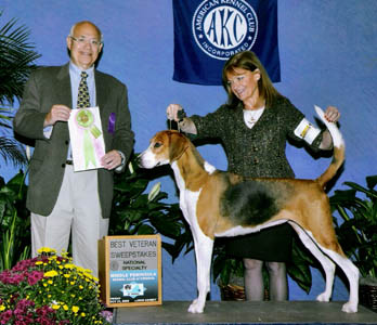 Victoria is Best Veteran at the Foxhound National Specialty!